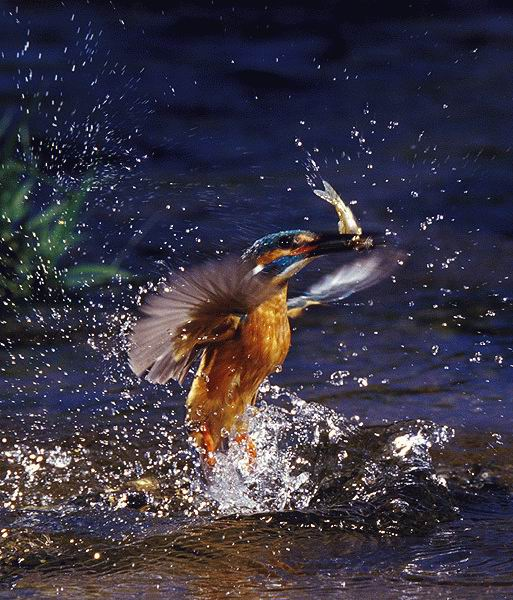 amazing photography animals in action unbelievable and